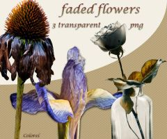 faded flowers by libidules