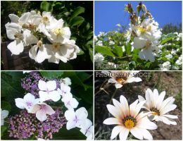 Flowers 2 by photoshop-stock