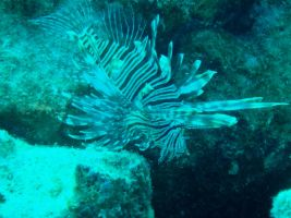 Bonaire - Lionfish by Zachg56