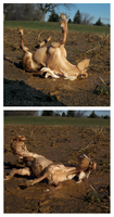 Breyer - Muddy Release by The-Toy-Chest