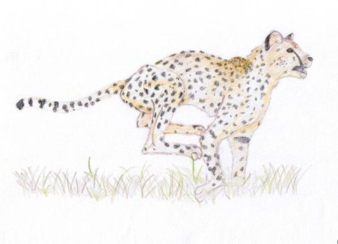 Dodgy Cheetah by KiltedFish