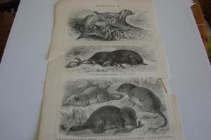 Lithograph FOR SALE or TRADE: Insectivores pt.2 by Lot1rthylacine