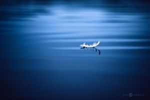 White Feather by Nitrok