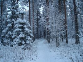 Wintry Forest by Miimi90