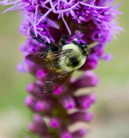 Bumble II by EarthBerry