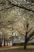 Place 13. Blooming Campus 2. by MystStock