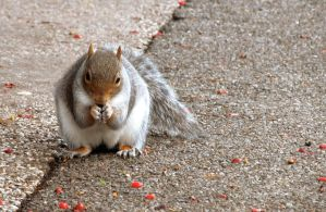 Chubby Squirrel by Becky125