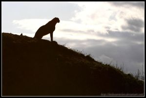 Cheetah Silhouette II by AF--Photography