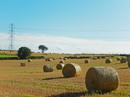 Hay Bales in the sun. by issielikessteakpie