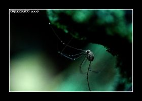 The Spider by DreamSand