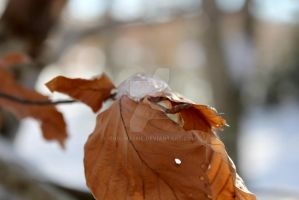 Feuille glacee by G0dlikesme