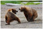 Battle at Katmai part III by Nate-Zeman