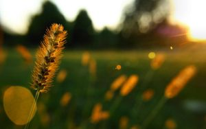 Flaring Grass by Anachronist84