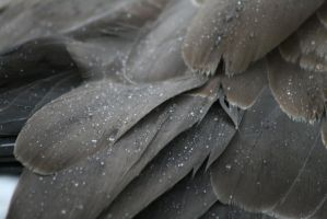Raindrop feathers by hiresblur