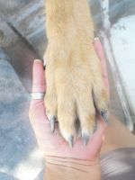 Trancred's paw by AngelMC18