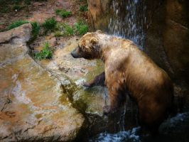 Grizzly Wizzly by Due-South