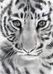 tiger by monster242