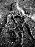 Dead roots by aliveruka