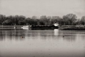 Ducks on the river in winter by Tjabula