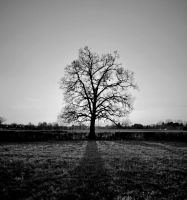 The Lonely Tree by ryanhatfield