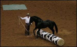 Jump that by Equines