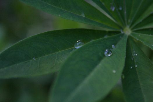 drops2 by luthien070