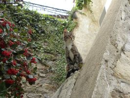 . Le chat curieux by Flore-stock