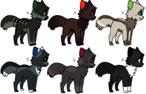 CatTier adopts by CollisionXIII