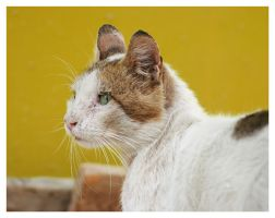 egyptian cat5 by FILIUS