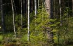 Summer 32 wood by Henrikson