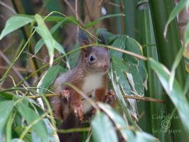 Squirrel 183 by Cundrie-la-Surziere