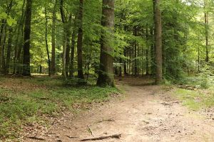 Forest Stock 073 by Malleni-Stock