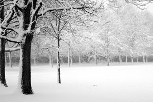 Snow in the Park II by fraughtuk