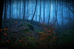 Magical Forest by LillianEvill