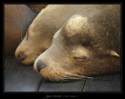 Seal Lullaby by Crooty