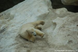 sliding polar bear cub by KIARAsART
