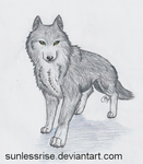Majestic Grey Wolf by SunlessRise