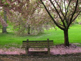 Park Bench 1 by bean-stock