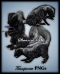 Skunk-Animal Stock by shd-stock
