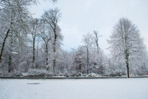 Snowscape Stock 81 by Sed-rah-Stock
