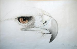 Golden Eagle photo of drawing by llamacat