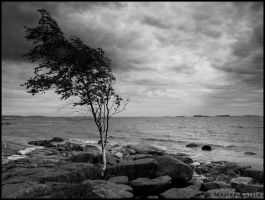 lonely every day by kallio