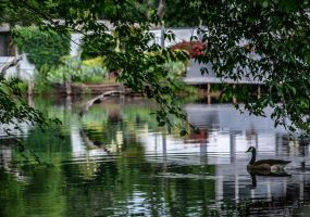 busy time at goose alcove by jetsetaphrodite