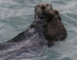 momma otter and her baby 01 by DennisDawg