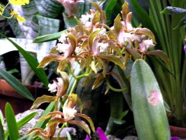 Spider orchids by hydestock