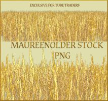 EXCLUSIVE STOCK PNG corn field by MaureenOlder