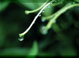 green wallpaper by 00SpaceOddity00