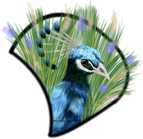 Peacock grass by Engordia