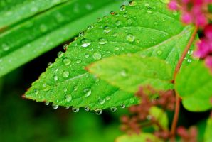 Water Drops by SmileyG