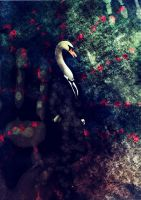The Swan by cosboom